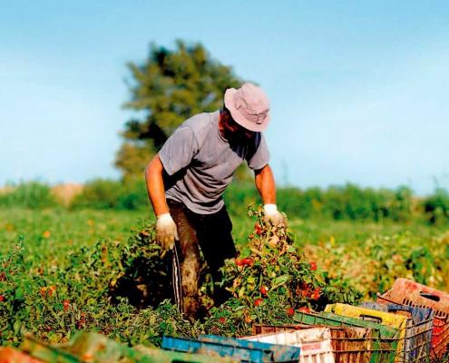 Ny undersøgelse: Forbrugerne har behov for hjælp til at spise klimavenligt